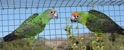 jardins.parrot.JPG