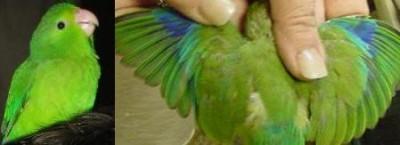 green.rump.hen.jpg