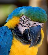 macaw.jpg