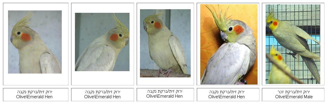 OliveEmerald