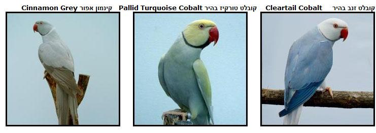 Parakeet4