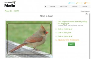 birds.cornell
