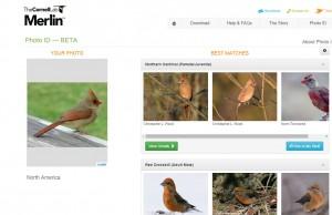 birds.cornell2
